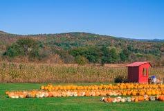 Bani pole z kukurudzą Fotografia Royalty Free