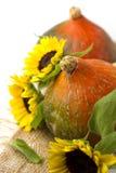 Bania i słoneczniki zdjęcie royalty free