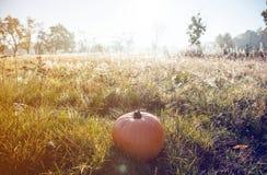 bania na zielonej trawie fotografia stock