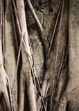 Banian Photographie stock libre de droits