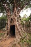 Banian au temple de som de ventres Photos libres de droits