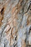 Banian de oppervlaktetextuur van de boomboomstam Stock Foto
