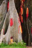 Baniano del primer con las rayas rojas en parque Imagen de archivo libre de regalías
