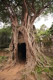 Baniano en el templo del som de TA Fotos de archivo libres de regalías
