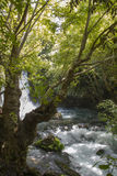 Banias Nature Reserve in northern Israel. Waterfall on River Hermon ,Banias Nature Reserve in northern Israel Stock Images