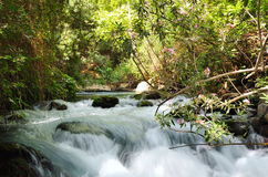 Banias Waterfall Stock Photography