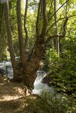 Banias waterfall in northern Israel Royalty Free Stock Photo