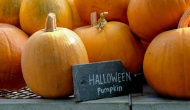 Banie brogowa? w g?r? p??ki w gospodarstwo rolne sklepie z ?upek deski znaka czytaniem na: Halloweenowe banie zdjęcie stock