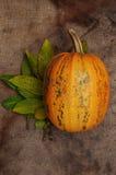 Banie, Halloween, pomarańczowe banie Obraz Stock