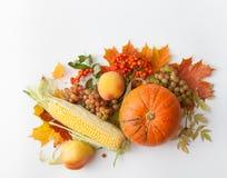 Banie, jabłka, kukurudza, bonkreta, winogrona z jesień liśćmi i halny popiół, Zdjęcie Stock