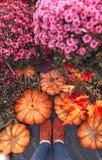 Banie Jesieni sceneria banie i kwiaty zdjęcia stock
