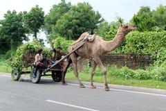 Banjara avec le chariot de chameau Photographie stock