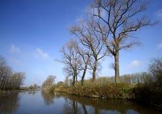 banków drzewa Obraz Royalty Free