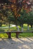 Bank auf Gasse im Park mit grünem Gras lizenzfreie stockfotos