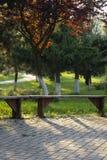 Bank auf Gasse im Park mit grünem Gras stockfotografie