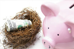 Bank cash. Hundred dollar bill in a nest, with piggy bank Stock Photography