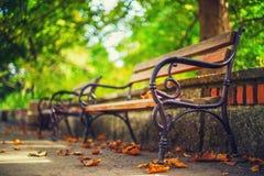Bank in de herfstpark Autumn Landscape stock afbeeldingen