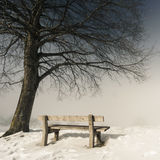 Bank, de mistige winter dag 151 Stock Foto's