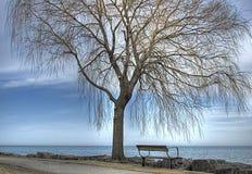 Bank durch den See unter einem Weide-Baum Lizenzfreie Stockfotos