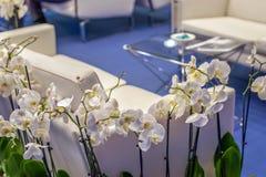 Bank en bloemen in het bureau Klanten wachtende plaats Stock Afbeeldingen