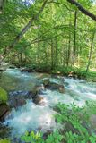 Bank of the forest river. Beautiful summer nature scenery. huge rocks form a cascade on the creek. twigs hang above the flow. trees and mossy boulders on the royalty free stock photo
