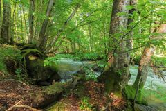 Bank of the forest river. Beautiful summer nature scenery. trees and mossy boulders on the edge of a shore in dappled light. long exposure stock photos