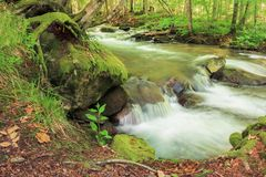 Bank of the forest river. Beautiful summer nature scenery. trees and mossy boulders on the shore of a stream. long exposure royalty free stock images