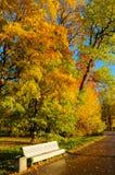 Bank in het de herfstpark royalty-vrije stock foto's