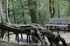 Bank in het park Een mooie oude boom Royalty-vrije Stock Foto's