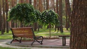 Bank in het Park en de bomen stock videobeelden