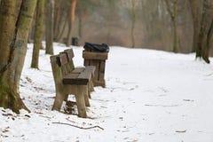 Bank im Großen Naturpark des Winters stockbild