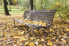 Bank im Herbst Stockbild