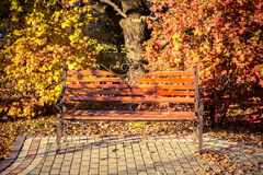 Bank im Herbstpark Stockfoto