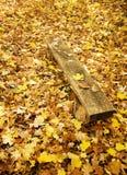 Bank im Herbstwald Stockfotografie