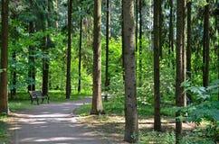 Bank im Park Ein Nadelholz im Osteuropa Stockfoto