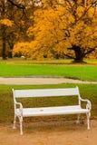 Bank im Park im Herbst Stockbild
