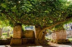 Bank im Schatten des Baums Stockbilder