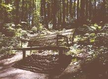 Bank im Wald überwältigt mit dem Grün stockfotos