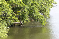 Bank with jetty and overhanging trees at a lake Stock Images