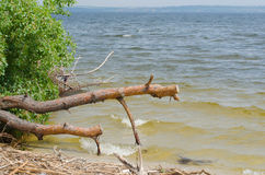 Bank of the Kakhovske reservoir. With broken tree stock image
