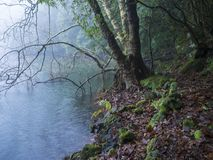 Bank of Lagoa do Congro volcanic lake in mysterious green rainforest in Sao Miguel island, misty trees, stones and moss royalty free stock image