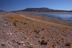 Bank of the laguna on the altiplano Royalty Free Stock Photography