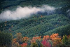 Autumn colors along thickly forested hillside. A bank of low clouds nestle in a valley of a thickly forested hillside, sprinkled with autumn colors that are Stock Photos