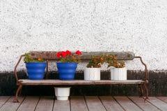 Bank mit Blumenpotentiometern Stockfoto