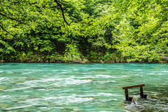 Bank of the mountain river and forest in Montenegro. Stock Image