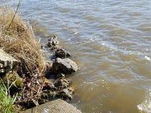 Bank na jeziorze zdjęcia royalty free