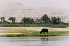 The bank of the Nile river. Royalty Free Stock Image