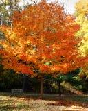 Bank onder boom in de herfst Stock Foto's