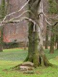Bank onder de oude boom Royalty-vrije Stock Afbeeldingen