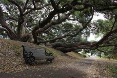 Bank onder de oude boom in het park Royalty-vrije Stock Fotografie